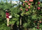 Miracle Farms, a 12-acre commercial permaculture orchard in Southern Quebec
