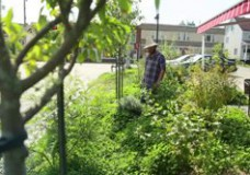 Écomestible, edible landscaping and urban permaculture