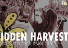 Hidden Harvest – The food hiding in plain sight