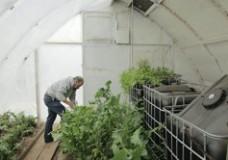 Growing food with zero heating in Massachusetts winter