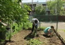 Gardening without a garden