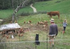 Pastured laying hens in the French Pyrenees